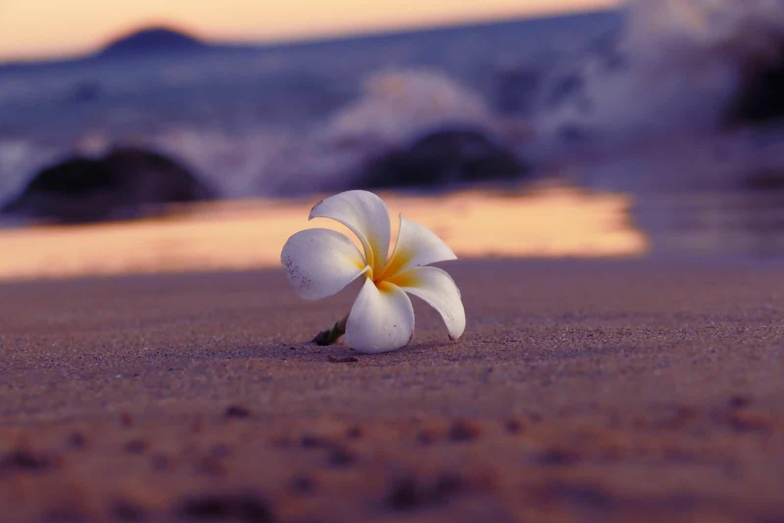 Bienvenue sur le site web du Dojo Aloha