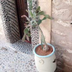 stage-maroc-dojoaloha20181114_130259